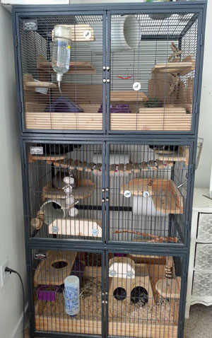 Triple Stacked Ferret Nation Cages
